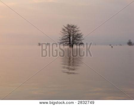 Reflection Of Tree On Lake