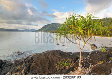 A Pandanus Tree Growing On The Rocky Headland At Noah Beach - Located In The Daintree Region North O