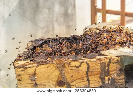 Black Bee-carpenters (genus Xylocopa) Fly Into A Beehive Tray From An Old Tree Stump On A Bee Farm -