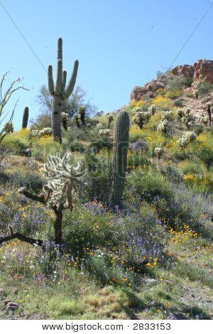 Desert Springtime