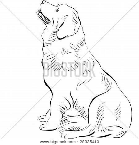Vector Sketch Dog Vector Photo Free Trial Bigstock