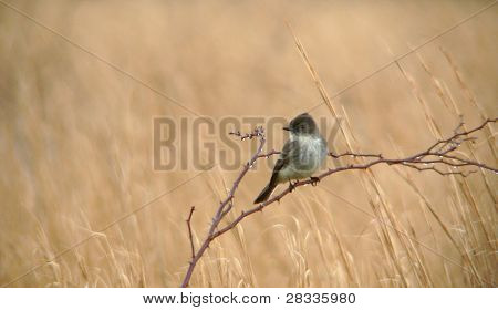 Bird On Briars In The Rain
