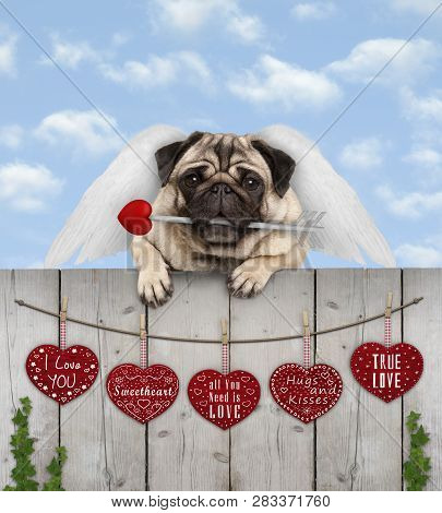 Cute Pug Puppy Dog With Cupid Angel Wings And Arrow, Hanging On Fence With Wooden Hearts With Love T