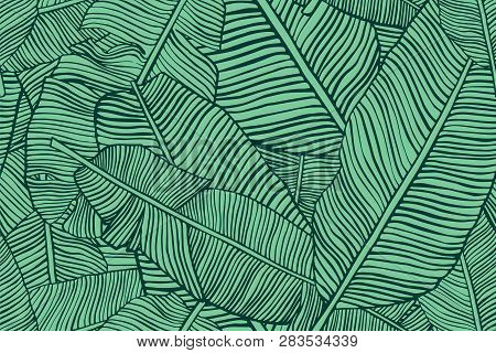 Tropical Leaves. Seamless Texture With Banana Leaf. Hand Drawn Tropic Foliage. Exotic Green Backgrou