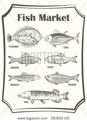 Hand Sketched Different Fish Vector Poster Template. Fish Market Banner. Illustration Of Seafood Mar