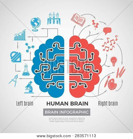 Brain Silhouette Infographic. Creative Thinking Learning Processes In People Brain Vector Picture Bu