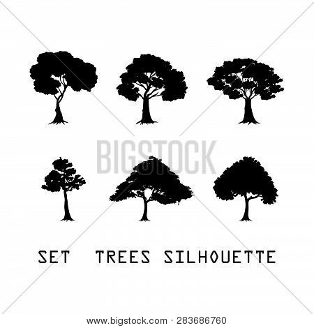 Set Detailed Vectoral Trees Silhouette.vector Illustration Isolated On White Background. Pine Africa