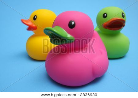 Ducks Three