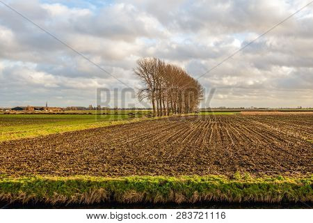 Row Of Tall Bare Trees Next To A Maize Stubble Field In A Dutch Polder In Wintertime. The Photo Was