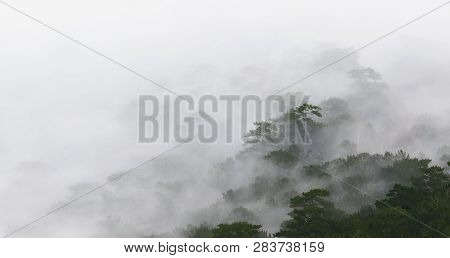 Silence Of Misty Forest. Misty Deep Forest In Autumn.