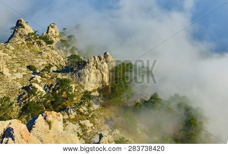 Misty Forest In High Mountains. View Of Mountain Pine In Misty Highland.