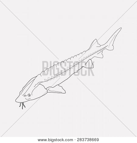 Sturgeon Icon Line Element. Vector Illustration Of Sturgeon Icon Line Isolated On Clean Background F