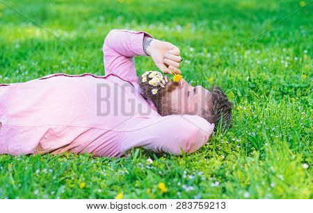 Man with beard on calm face sniffs dandelion. Peace and tranquility concept. Guy with bouquet of daisies in beard relaxing. Bearded man with daisy flowers in beard lay on grassplot, grass background poster