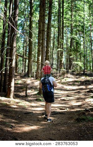 Father With Backpack And Young Son On His Shoulders Walking On A Coniferous Forest. Back View. Activ