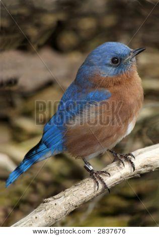 Little Blue Bird On A Perch