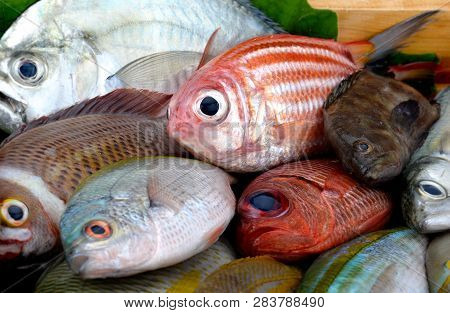Mix Colorful Sea Fishes.