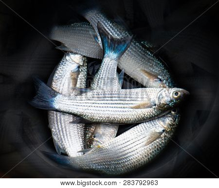 Mullet Fishes In The Black Bucket.