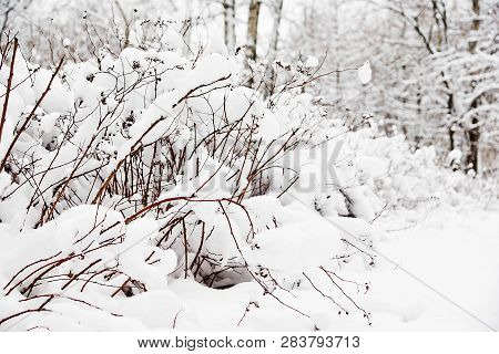 Bushes Under The Snow In A Park