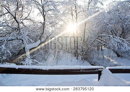 Trees Under Snow And Sun In A Park