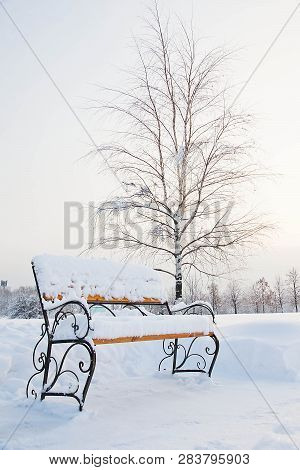 Bench And Trees In The Snow In Winter