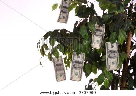 $100 bills growing on a money tree with a white background. Vertical image. poster