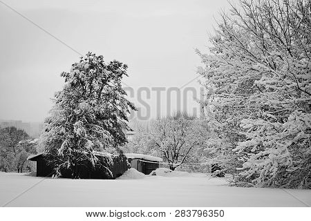 House And Trees In Snow In Winter Black And White