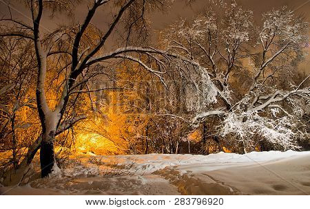 Trees Under The Snow And The Light Of Street Lamps