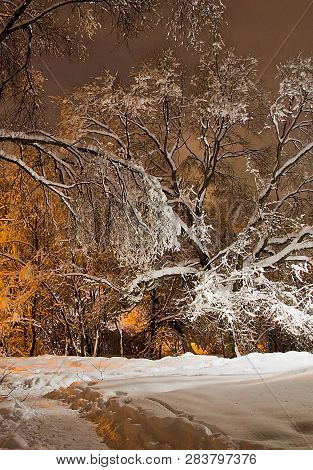 Trees Under The Snow And The Light Of Street Lamps In Winter