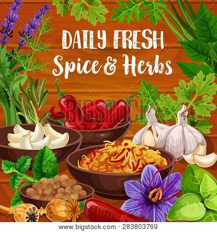 Seasonings Of Herbs And Cooking Spices, Vector. Chili And Garlic, Nutmeg And Poppy, Fresh And Dried