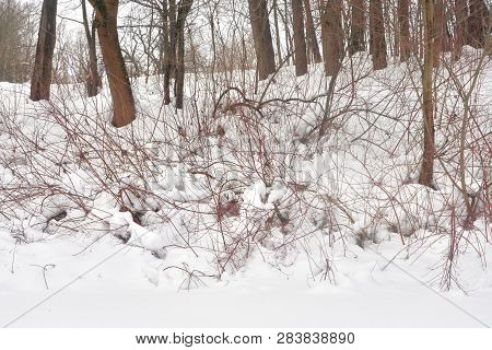 Trees And Bushes In Deciduous Forest At Cloud Winter Day.