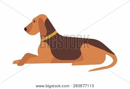Cute Funny Lovely Dog Lying And Resting On Floor Isolated On White Background. Adorable Calm Purebre