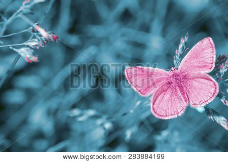 Dreamy Meadow With Flying Red Butterfly. Surreal Fairytale Beauty Spring Garden, Magic Morning In En