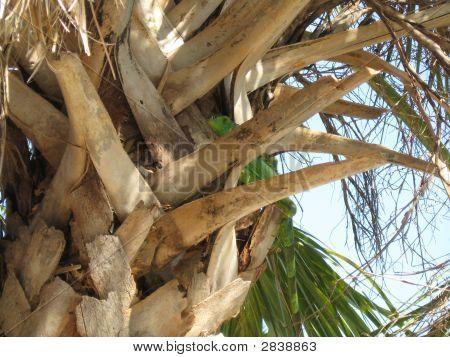 Lizard In A Palm Tree