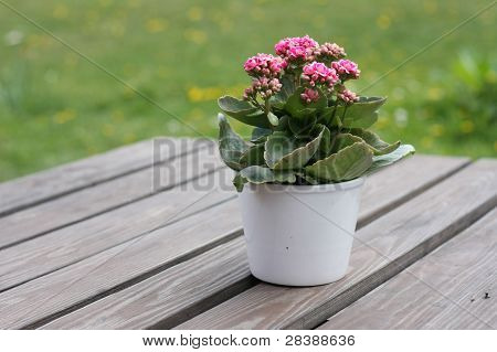 Tabell blomma