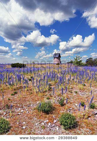 Purple Flower Countryside
