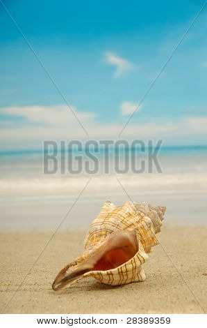 A conch shell on an exotic beach with the sea in the background