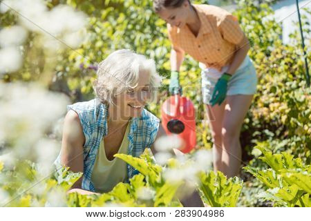 Senior and young woman gardening together in their garden