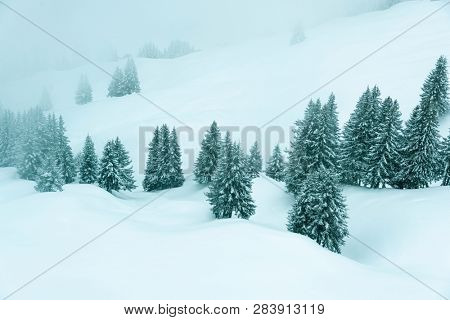 moody winter scenery of trees covered by snow and fog