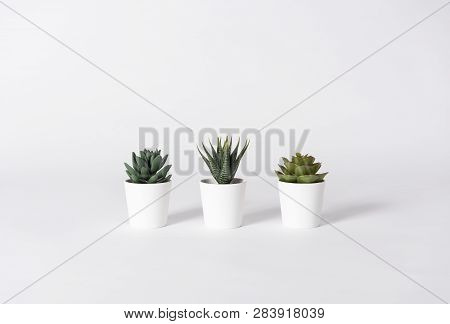 Collection Of Various Cactus In Pot On Gray Background.