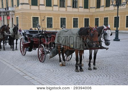 Horse Wagon at Vienna