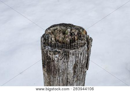 Old Stump On The Lake. Tree Stump Close Up