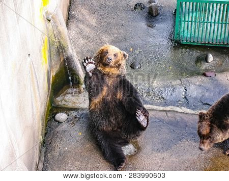 Noboribetsu, A Park Of Bears In Japan, Bears In A Zoo.