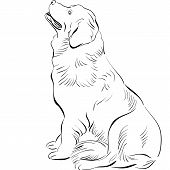 black and white sketch of the dog Newfoundland hound breed sitting poster