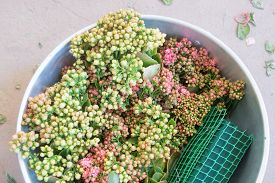 A Bucket Of Flower Buds Waiting To Be Used For Wedding Decorations