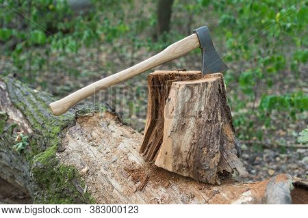 Tree Cut With Axe. Survive In Wild Nature Concept. Ax Stuck In A Tree Stump. Axe In The Forest. Cut