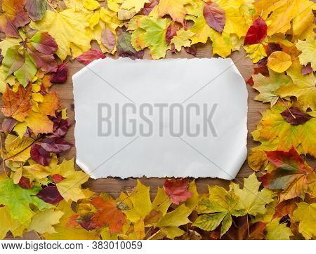Autumn Leaves Composition With White Paper Sheet On Wooden Background, Top View Of Set For Copy Spac