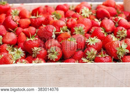 Freshly Picked Strawberry In A Wooden Box. Sweet Natural Fruits In Wooden Crate. Fresh Strawberries