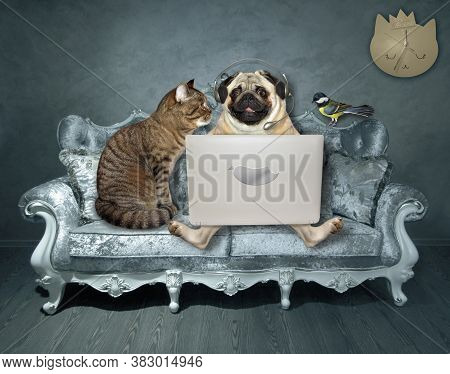 A Pug Dog In Headphones And A Cat Are Sitting On A Divan And Using A Laptop. A Bird Is Next To Them.