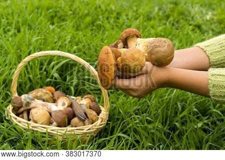 Various Raw Mushrooms In A Wicker Basket On The Grass. The Knife Is In The Basket. Porcini Mushrooms