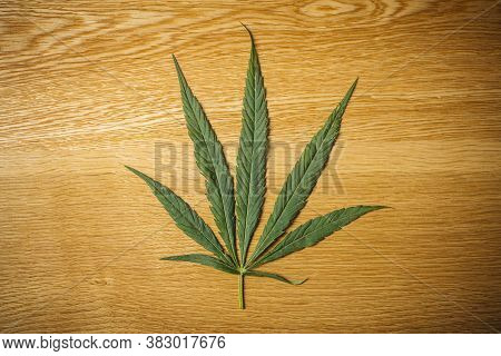 Cannabis (marijuana) Leaves In Female Hands. Medical Marijuana (hemp) And Products With Cannabidiol